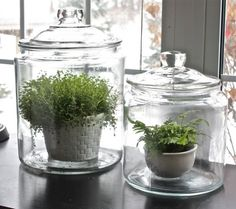 plants in a jar:  http://www.thenester.com/2012/04/using-plants-in-your-home-part-4-terrariums.html#