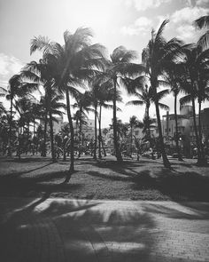 Palm trees at Lummus Park <3