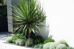 This week on Houzz Australia has an article on beautiful Courtyard garden design to inspire you. The article features two of Secret Gardens projects. Seaside Garden, Coastal Gardens, Beach Gardens, Tropical Garden, Small Gardens, Outdoor Gardens, Palm Garden, Garden Cottage, Landscape Architecture