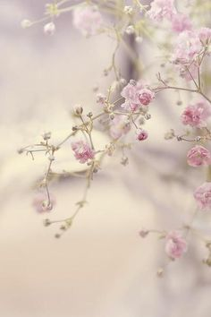 X Chic Artificial Cherry Blossom Flower Silk Sakura Branch Floral-Twig-Decor My Flower, Pretty In Pink, Beautiful Flowers, Flower Tree, Pretty Roses, Bouquet, Jolie Photo, Flowering Trees, Simply Beautiful