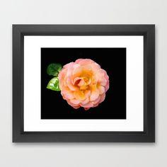 Orange ,Rosa Rose Framed Art Print