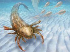 Predador gigante que viveu há 467 milhões de anos é o mais antigo ancestral dos artrópodes de que se tem notícia
