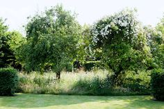 Grow Rambling Roses Up Old Apple Trees in Country Garden Design Ideas - how to a create a well-planned herbaceous border and farmhouse or cottage look, ideas for gardens both big and small. Meadow Garden, Garden Trees, Dream Garden, Champs, Landscape Design, Garden Design, House Design, Orchard Design, Wild Flower Meadow