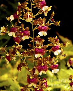 Orchid Study IX - taken in the botanical gardens on Maui, Hawaii. ©2011 Patricia Griffin Brett on Fine Art America.