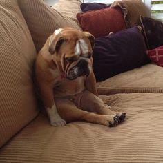 This pup needs a hug.