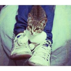Gatito Cats, Animals, Kitty, Fotografia, Photography, Gatos, Animales, Animaux, Animal