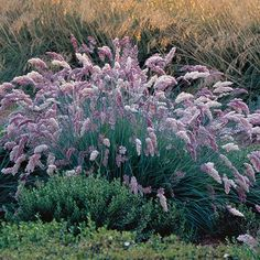 9 New and Unusual Grasses - FineGardening