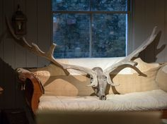 A magnificent set of Irish elk antlers of monumental scale -