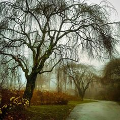 Last foggy pic today. #fog #garden #treescollection #barebranches