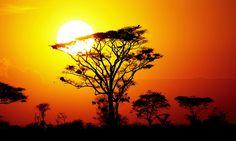 Serengheti National Park, Tanzania