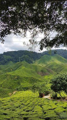 Campos de chá da Malásia, Cameron Highlands | Viaje Comigo Malaysia Truly Asia, Cameron Highlands, Kuala Lumpur, River, Mountains, Nature, Outdoor, Fields, Traveling