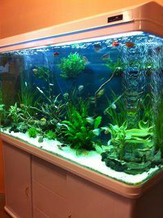 Barry's 120cm Cabinet tank in white!    http://www.allpondsolutions.co.uk/cabinet-fish-tank-aquarium-330-litres-120cm-four-colours.html