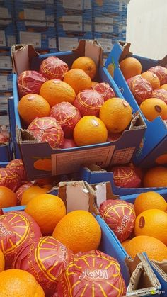 Local Agro Classifieds Oranges (Valencia) Egypt - FRUITS - MOSCOW - FREE INTERNATIONAL CLASSIFIEDS