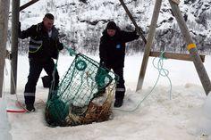 Pesca del cangro real en Kirkenes. Laponia noruega / King crab fishing on the ice