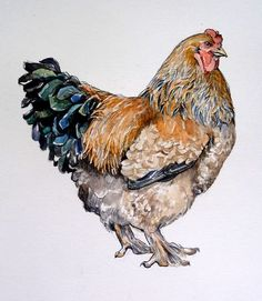 I do have a soft spot for roosters....he's gorgeous!