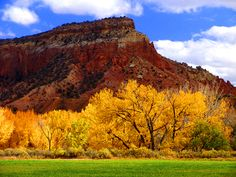Thi is autumn in my corner of the world! New Mexico - Ghost Ranch autumn