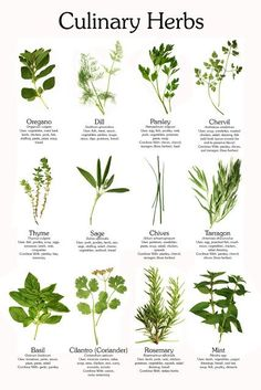 Carole's Chatter: Here are the common culinary herbs