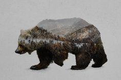 """The Kodiak Brown Bear"" Art Print by Davies Babies on Society6."