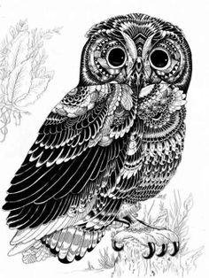 Wildlife Illustrations by Iain Macarthurvia Sandbox World #kindle #screensaver