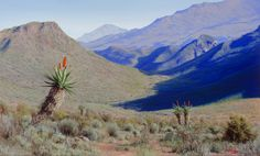 Painting of aloes in the Karoo Western Cape Landscape Art, Landscape Paintings, Landscapes, African Life, Smell Of Rain, South African Artists, Mountain Paintings, Claude Monet, Fine Art Gallery