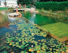 Have you heard of these natural pools? You use plants as natural filters and never add any chemicals. They are more beautiful and earth friendly. I've always wanted one :)