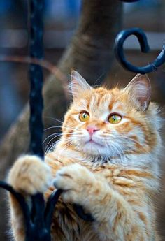 """""""God created the cat so that Man might have the pleasure of caressing the tiger."""" --British Proverb"""