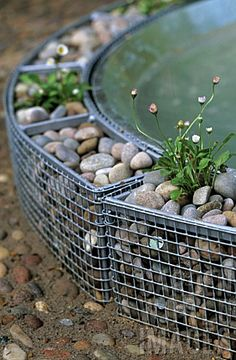 SMALL GABION CAGES WITH PEBBLES SURROUNDING A WATER FEATURE AND PLANTED WITH DAISIES (BELLIS PERENNIS)
