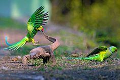 Ducks at Bharatpur bird sanctuary