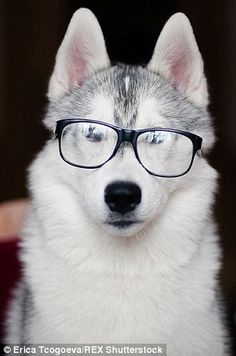 d223c4000e53 9 Rabbits Wearing Glasses   Just for Fun!   Wearing glasses, Animals ...
