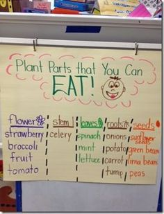 First Grade Wizards: Yummy Plant Parts, Egg-cellent word work and Texas. First Grade Wizards: Yumm First Grade Science, Kindergarten Science, Elementary Science, Science Classroom, Teaching Science, Science Activities, Science Ideas, Teaching Ideas, Classroom Ideas