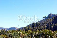 New Zealand's Native Flora, Mangarakau, Golden Bay Royalty Free Stock Photo