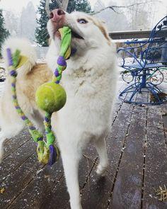 Snow day! http://ift.tt/2hxuAy2