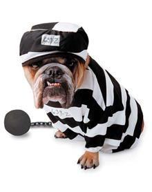 Prisoner Pet Costume - Spirit Halloween