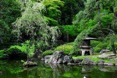 Lime Viikuna: Japanilainen puutarha