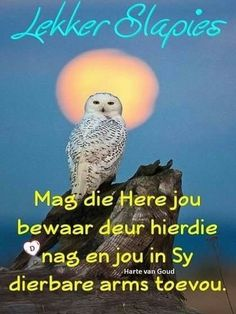 Good Morning Greetings, Good Morning Good Night, Good Night Quotes, Identifying Succulents, Goeie Nag, Afrikaans Quotes, Special Quotes, Parrot, Inspirational Quotes