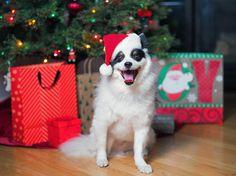 Animal Photography, Husky, Holidays, Friends, Check, Tips, People, Fun, Animals