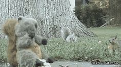 There are two kinds of squirrels. | 31 GIFs That Will Make You Laugh Every Time