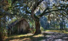 There could definitely be an old witch living inside this abandoned barn near Micanopy. Places In Florida, Visit Florida, Old Florida, Florida Travel, Florida Girl, Florida Living, Florida Vacation, South Florida, Small Barns