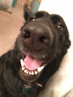 Repinned by RoyalRamps.com! Boop the smiling snoot.