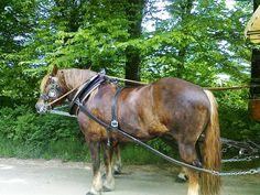 Zapřažení koně