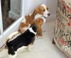 Beagles levados por ativista de laboratório estão em apartamento na capital  (Foto: Gabriela Gasparin/G1)