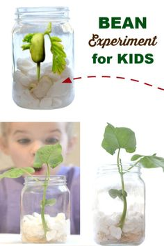 Teach kids all about plants and how they thrive with this easy experiment for kids! Preschool Garden, Preschool Science, Science Activities, Toddler Learning Activities, Indoor Activities For Kids, Teaching Kids, Plant Experiments, Science Experiments Kids, Science Projects For Kids