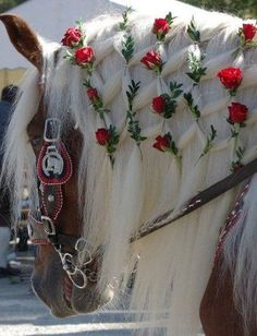 """Andalusian horse, """"everything's coming up roses"""", beautiful mane work on this brown with white mane Andalusian."""