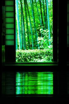 Traditional house,Japan #緑 #green