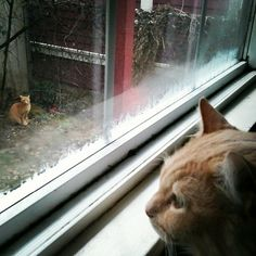 ginger kitty stand-off