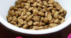 Pet Parents Beware: 8 Red Flag Dog Food Ingredients To Avoid