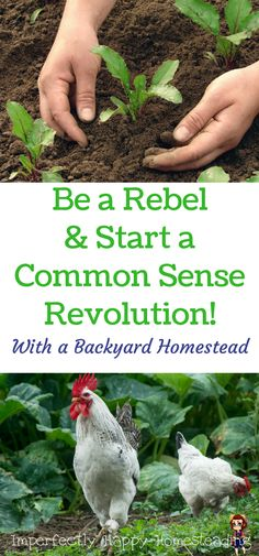 Be a Rebel & Start a Common Sense Revolution - With a Backyard Homestead!