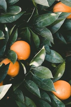 Pretty oranges!