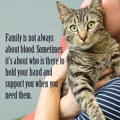 There's the dog people and then there's the cat people, and that battle may rage on forever. Cats are social creatures capable of relationships with people and let you love them most. I Love Cats, Cute Cats, Funny Cats, Funny Animals, Cute Animals, Cat Quotes, Animal Quotes, Crazy Cat Lady, Crazy Cats