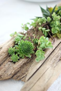 A piece of driftwood is hollowed to make a beautiful succulent planter. It can be displayed indoors on a table or outdoors as part of your garden display. Driftwood Planters, Diy Planters, Planter Ideas, Cactus Planta, Cactus Y Suculentas, Faux Succulents, Planting Succulents, Indoor Succulents, Succulent Planters
